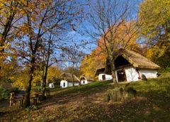 Vas megyei értékek – Banyafák az őserdőben